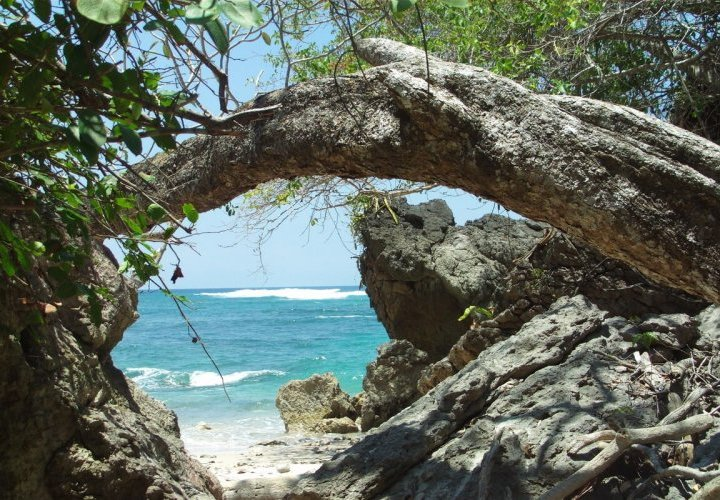 Hike in the Cabo Blanco Biological Reserve and Yoga class