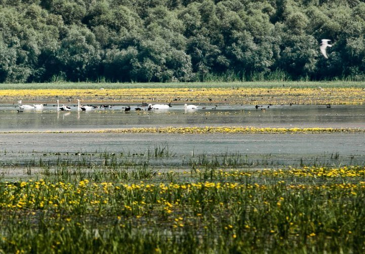 Discovery of Prutul de Jos (Lower Prut) Nature Reserve and Beleu Lake