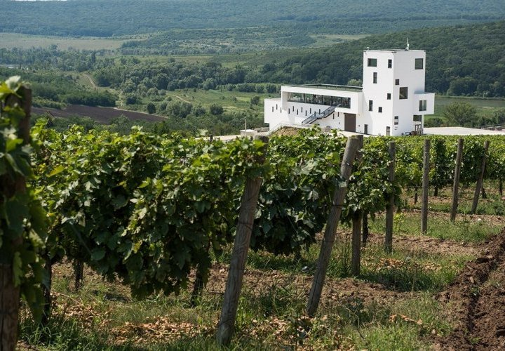 Discovery of Château Cojusna (Migdal-P) and Poiana wineries
