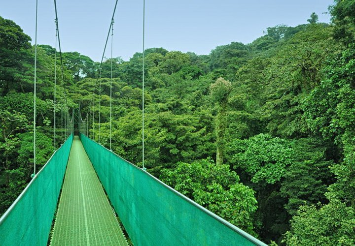 Monteverde Cloud Forest Biological Reserve known for its network of 13-kilometer trails